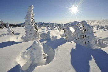 zimni-krkonose