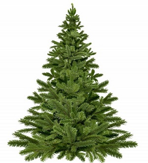 christmas_tree_christmas_tree_christmas_christmas_pine_happy_holidays_twigs_needle_christmas_decoration-1216018.jpg!d